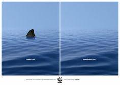 Ban shark finning. Say no to shark fin soup.