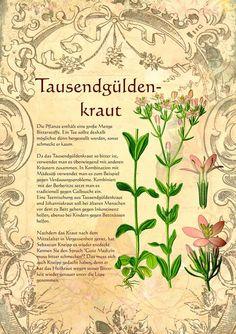 http://www.kraeuter-verzeichnis.de/kraeuter/Tausendgueldenkraut.htm