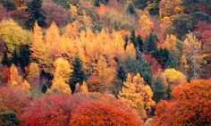 Paul Simons says the washout summer and this month's sunshine may mean a sensational autumn