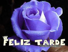 Linda rosa azul para desearte con todo mi cariño una Feliz Tarde