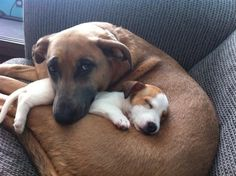 "New rescue puppy with older dog.  ""My puppy. Get your own"""