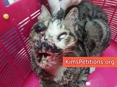 Justice for Miracle, Algerian cat abused to extreme!