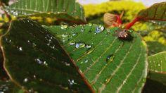 A beleza está nas pequenas coisas de vida.