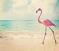 Fond d'écran flaman rose et plage