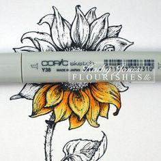 Sunflower 3 kaj