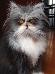 Atchoum the cat - Official Website - Home
