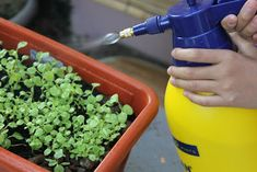 When growing vegetables in containers, you will get better results if you apply fertilizer regularly. Organic Compost, Organic Fertilizer, Organic Gardening, Gardening Tips, Organic Pesticides, Growing Veggies, Growing Plants, Growing Flowers, Acid Loving Plants