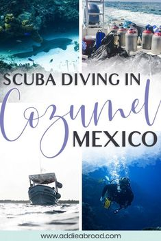 Cozumel is one of the best dive spots in the world! Check out this complete Cozumel scuba diving guide for everything you need to know about diving here. Cozumel Scuba Diving, Scuba Diving Courses, Best Scuba Diving, Scuba Diving Gear, Cave Diving, Snorkeling, Cozumel Mexico, Cancun, Tulum