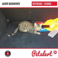 Cette Alerte (204966) est désormais close : elle n'est donc plus visible sur la plate-forme Petalert Suisse. Cette Alerte est échue automatiquement depuis le 04.02.2020 Merci pour votre aide. Visible, Aide, Cats, Switzerland, Thanks, Shape, Dog, Animaux, Gatos