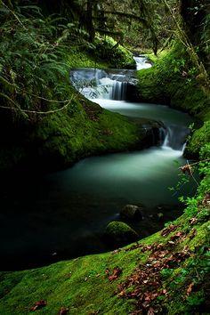 With this image I feel a coolness, calm, peaceful place- ahhhh! Tina Hofler via Mark Rayner