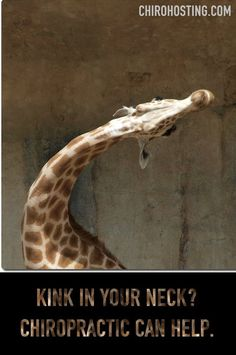Funny animal chiropractic