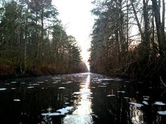 Dismal Swamp Photo by Walker Cheatham