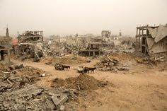 Palestinians ride donkey carts during a sandstorm next to buildings destroyed during last year's 50-day war between Israel and Hamas-led militant...