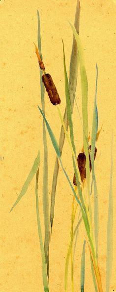 Watercolor, cattail reed, by Alice Ravenel Huger Smith, a Charleston Renaissance artist. Charleston Museum