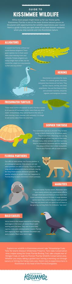 A Guide to Kissimmee Wildlife! Can you spot all these creatures on your next Central Florida vacation? Bahamas Vacation, Vacation Trips, Vacations, Wildlife Nature, Nature Animals, Travel Info, Travel Usa, Freshwater Turtles, Celebration Florida
