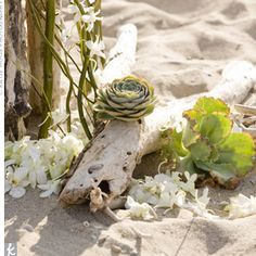 Ceremony decorations - drift wood, succulents and orchids?