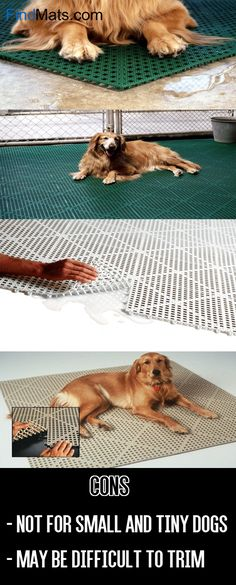 18 Dog Kennel Flooring For Outdoor And
