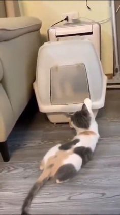 Funny Animal Memes, Cute Funny Animals, Crazy Cat Lady, Crazy Cats, Animal Antics, Secret Life Of Pets, Funny Cats And Dogs, Cute Animal Videos, Have A Laugh