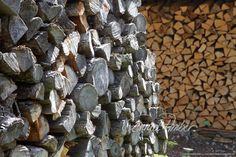 Motive finden - Conrad Amber Plants, Wood Walls, Craft Work, Nature, Plant, Planting, Planets
