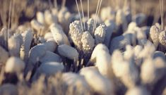 How to quickly model and setup flowers and some basic grass for a macro shot using Cinema 4Ds physical render engine.    Download example file with proper displacement shaders: www.konstantinmagnus.de/files/flower.c4d