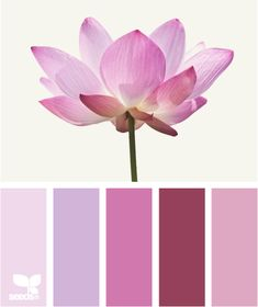 Lotus hues, from Design Seeds Scheme Color, Colour Pallette, Colour Schemes, Color Combos, Color Patterns, Pink Palette, Design Seeds, Colour Board, Color Swatches