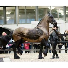 Pegasus !! #pegasus  #horseshow #horses #beautiful #horsesofinstagram  #calranch #calculture  #calranchstores