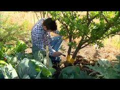 The Garden Gurus - Fruit Fly Bait Recipe Fruit Fly Repellent, Fly Repellant, Fly Bait, Fruit Flies, Fly Traps, Water Wise, Agriculture, Gardening Tips, Outdoor Gardens