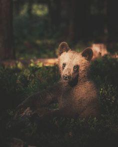 O fotógrafo Konsta Punkka faz cliques intimistas de animais selvagens - Foto: Konsta Punkka