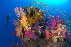 Ras Mohammed National Park, Sinai, Egypt ~ the best snorkeling time of my life