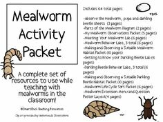 Mealworm Activity Packet Kindergarten Science, Science Classroom, Science Education, Teaching Science, Science Activities, Insect Activities, Sequencing Activities, Science Lessons, Life Science