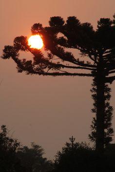 sunset, pinto bandeira