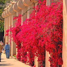Best Climbing Plants For Trellises, Arbors And Pergolas