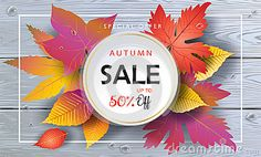 Autumn Sales banner, Fall Sale Vector illustration. Fall sales season poster with realistic drawing maple leaves, leaf fall, wood texture, water drops, red ribbon. Thanksgiving Holiday decoration. Autumn Sale gift card design. Marketing
