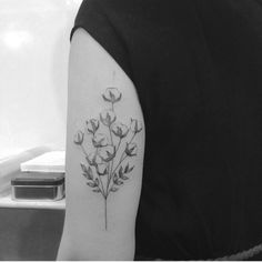 Cotton Flower #herbarium • Tattoo shared by brusimoes on...