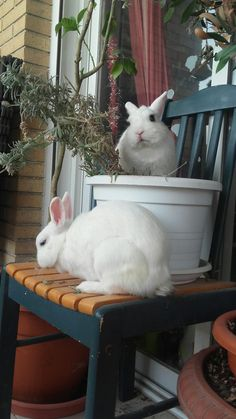 Small Animals, Cute Baby Animals, Animals And Pets, White Rabbits, Cheer Up, Cute Bunny, Buns, Cute Babies, Gardening