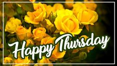 Beautiful Happy Thursday Image edited with yellow flowers background for Wish Someone A Happy Thursday. Happy Thursday Images, Wishes Images, Image Editing, Yellow Flowers, Beautiful, Editing Pictures