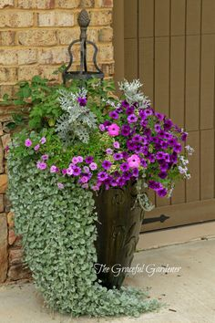 Purples and silvers are beautiful in potted gardens