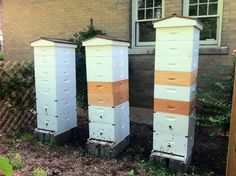 THE FEED: Honey Harvest and Bee Banquet July 15 to Give Firsthand Look at Jackson-Mills City Bees : Feast Magazine