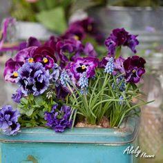 Las violetas son flores de una belleza increíble además de que tienen un aroma inigualable, prueba con un arreglo de estas flores.