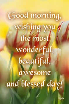 Good Morning, wishing you the most wonderful, beautiful, awesome and blessed day!