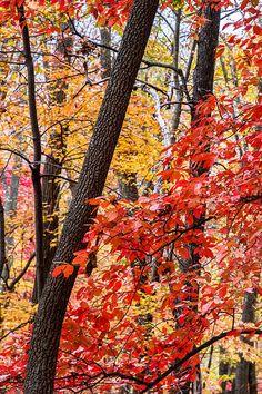 (via Fall In The Forest by John Haldane)