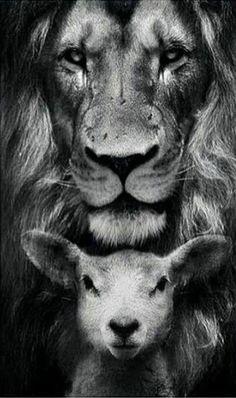 New quotes bible lion words ideas Jesus Wallpaper, Lion Wallpaper, Antique Wallpaper, Wallpaper Quotes, Jesus Christ Painting, Jesus Art, Image Lion, Lamm Tattoo, Lion Of Judah Jesus