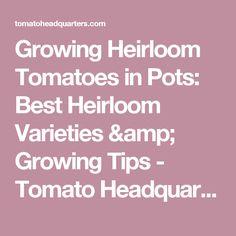 Growing Heirloom Tomatoes in Pots: Best Heirloom Varieties & Growing Tips - Tomato Headquarters