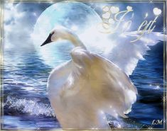 Flocking, Bird Feathers, Birds, Artist, Animals, Amazing, Google, Photos, Animales