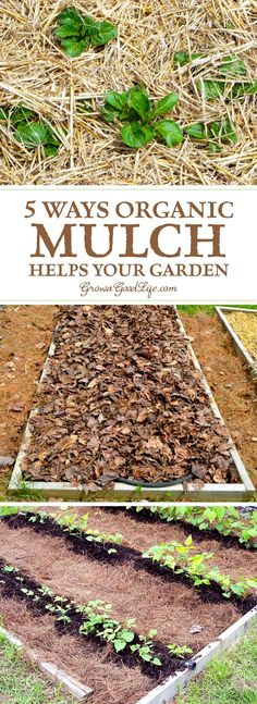 Mulch is any type of material that layered on the surface of the soil. Mulching your garden beds not only helps suppress weeds, it also prevents soil erosion and moderates soil-temperature fluctuations.