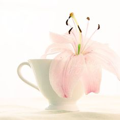 Pink Lily - flower photography by Golden Section floral photo print, nursery decor, girls room, wall art