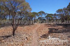 Pleasant walking near Redbank Views at the foothills of Mount Sonder. Image looking west. © Explorers Australia Pty Ltd 2014 Trekking, Trail, Walking, Country Roads, Australia, River, Explore, World, Image