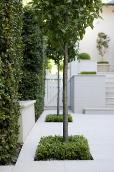 Urban Garden Design Modern Classic ‹ Peter Fudge Really love all the planting, great looking hedge. Love the trees. Modern Garden Design, Contemporary Garden, Landscape Design, Back Gardens, Small Gardens, Formal Gardens, Outdoor Gardens, Classic Garden, Garden Pool