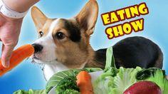 CORGI DOG ANNIHILATES VEGETABLES | MUKBANG ASMR EATING SHOW - Life After...