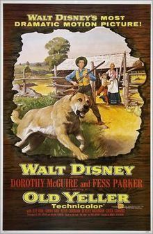 """Old Yeller went on to become an important cultural film for baby boomers, with Old Yeller's death in particular being remembered as one of the most tearful scenes in cinematic history. It currently has a rating of 100% on Rotten Tomatoes.  One critic cited it as """"among the best, if not THE best"""" of the boy-and-his-dog films. Old Yeller was produced by Walt Disney in 1957."""